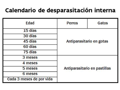 Vacunas Gatos Calendario.Calendarios De Vacunas Vacunacion De Cachorros